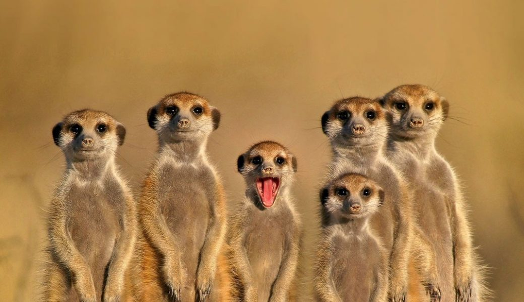 P3 – Who's Who In The Cx Zoo